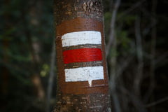 Colorful signs for hiking on the bark of a tree Royalty Free Stock Images
