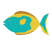 Colorful silhouette with sea fish blue and fins brown. Illustration Royalty Free Stock Image