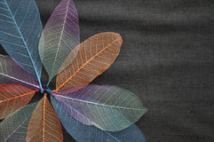 Colorful Skeleton Leaves in Blooming Flower Shape Royalty Free Stock Images