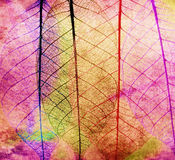 Colorful Skeleton Leaves,Close Up Royalty Free Stock Photos