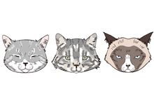 Colorful sketches of cat heads. Cats portraits on white background royalty free illustration