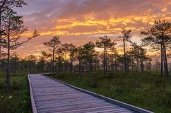 Colorful sky over a trail in a bog. Sunrise colors in the sky over a boardwalk in a bog royalty free stock images