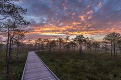 Colorful sky over a trail in a bog stock image