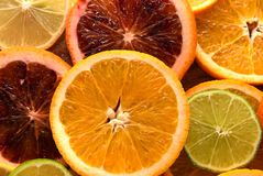 Colorful sliced citrus fruit Stock Image