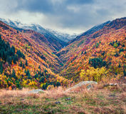 Colorful slopes of Caucasus mountain to used us background. Stock Images