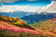 Colorful slopes of the Caucasus Mountains. Sunny autumn scene in the Upper Svaneti, Mazeri village location, Georgia, Europe. Artistic style post processed Royalty Free Stock Photography
