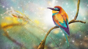 Colorful small bird Royalty Free Stock Photography