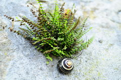Colorful snail on rock by fern Royalty Free Stock Images