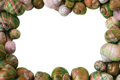 Colorful Snail Shells Background Royalty Free Stock Image