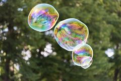 Colorful soap bubble in the air Royalty Free Stock Image