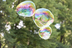 Colorful soap bubble in the air Royalty Free Stock Photo