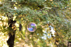 Colorful soap bubble in the air. Highly reflective colorful soap bubble floating in the air Royalty Free Stock Photos