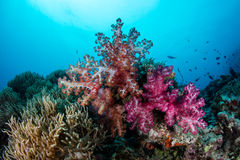 Colorful Soft Corals Royalty Free Stock Photo