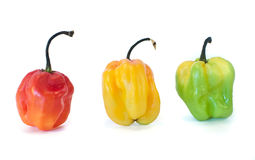 Colorful spicy peppers Royalty Free Stock Images