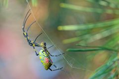 Free Colorful Spider Stock Image - 165361731