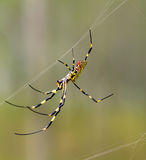 Colorful Spider Royalty Free Stock Image