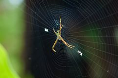 Colorful spider dark background Royalty Free Stock Photo