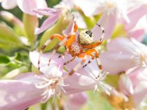 Colorful spider on a flower Stock Photo