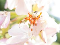 Colorful spider on a flower Royalty Free Stock Image
