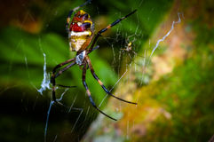Colorful spider inside of the Cuyabeno National Park, in Ecuador Stock Photo