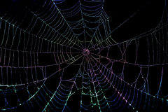 Colorful Spider Web Royalty Free Stock Photo