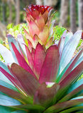 Colorful spiky plant Royalty Free Stock Photos