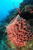 Colorful sponge on coral reef Royalty Free Stock Image