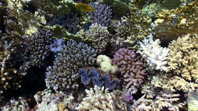 Colorful Sponge on Vibrant Coral Reef stock video