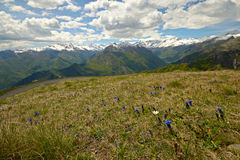 Colorful spring in the Alps Royalty Free Stock Photography