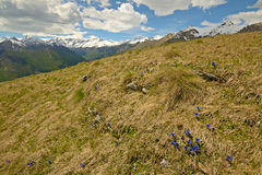 Colorful spring in the Alps Stock Photo