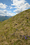Colorful spring in the Alps Stock Image