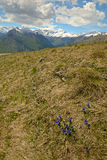 Colorful spring in the Alps Stock Photography