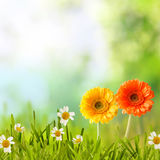 Colorful spring background with meadow flowers Stock Images
