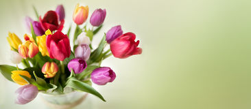 Colorful spring bouquet with tulips Stock Photos