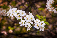 Colorful spring stock photography