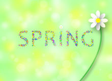 Colorful spring flower background Royalty Free Stock Photography