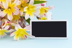 Colorful spring flower bouquet and blank blackboard sign for text. Colorful spring flower bouquet and blank blackboard sign for text, on blue background Stock Photo