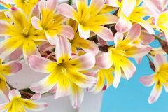 Colorful spring flower bouquet. Colorful spring flower bouquet closeup, on light blue background Stock Photography
