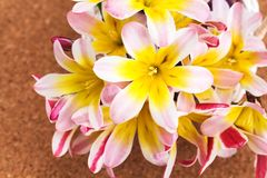 Colorful spring flower bouquet, on cork . Colorful spring flower bouquet, on cork textured background Stock Images