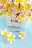 Colorful spring flower bouquet, in white wooden container . Colorful spring flower bouquet, in white wooden container and on light blue background Stock Images
