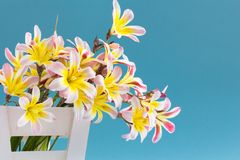 Colorful spring flower bouquet. Colorful spring flower bouquet, in white wooden container and on light blue background Stock Image
