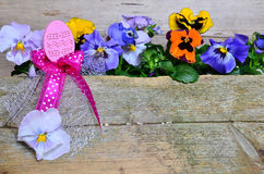 Colorful spring flower easter Stock Photo