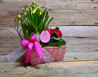 Colorful spring flower easter Royalty Free Stock Photos