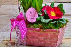 Colorful spring flower easter Stock Photography