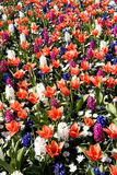 Colorful spring flower mix Stock Photos