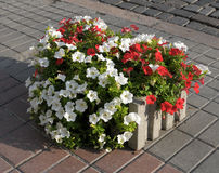 Colorful spring flower planter Royalty Free Stock Photo