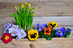 Colorful spring flower wood Royalty Free Stock Photo