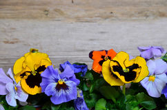 Colorful spring flower wood Royalty Free Stock Images