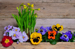 Colorful spring flower wood Stock Photo