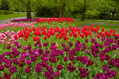 Colorful spring flowerbeds Stock Photography